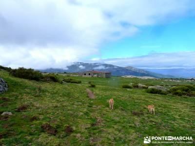 Castañar de El Tiemblo - Pozo de la Nieve- excursión de un día desde madrid